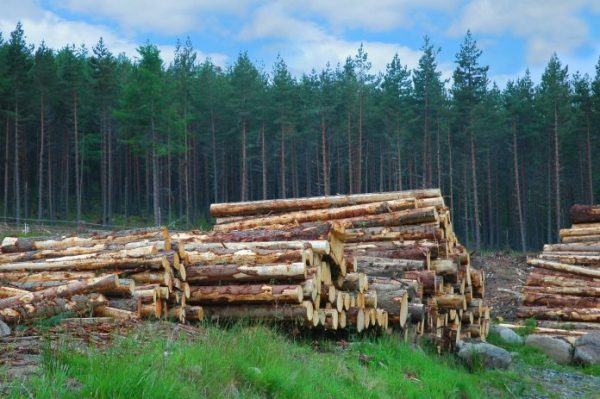 Project to showcase use of home-grown timber in UK construction